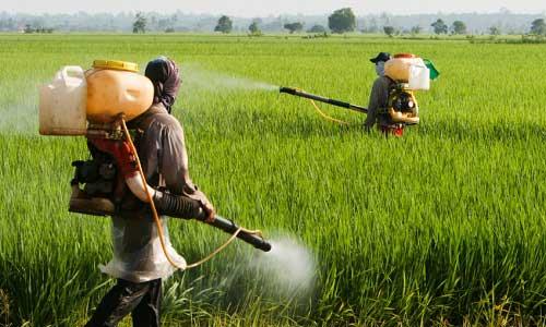 L'Impatto dei pesticidi sulle Api